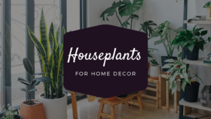 Which Houseplants Should You Buy for the Decoration of Your Home?
